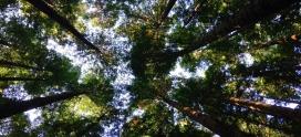 Chaudière gaz à condensation : une solution pour lutter contre la pollution